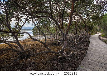 Boardwalk Among Mangroves In Merimbula Lake, Victoria, Australia