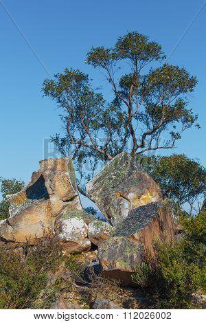 Australian Native Eucalyptus Tree And Big Rocks