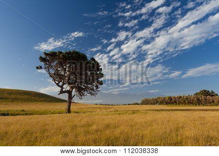 Lone Tree At Kaikoura Peninsula Walkway, New Zealand