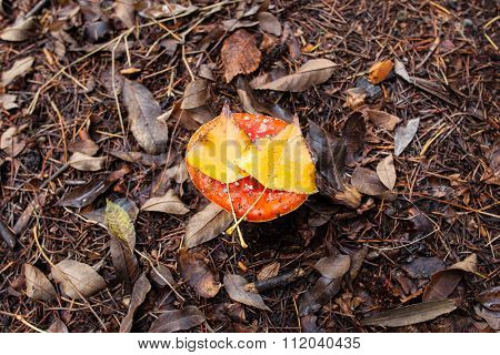 Amanita Muscaria Mushroom With Two Yellow Leafs On Top