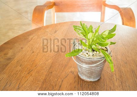 Bucket Of Green Plant Decorated On Wooden Table