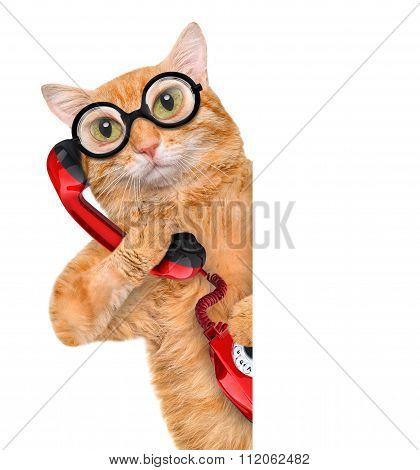 Cat talking on the phone.