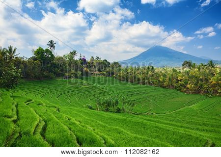 Green Rice Terraces Landscape On Mountain Background