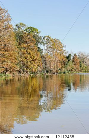 Colorful Trees Alone The Bayou