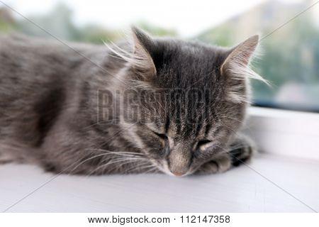 Beautiful grey cat on window board, close up