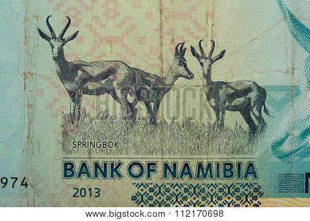 Detail Of 10 Namibian Dollars Banknote
