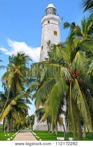 Lighthouse And Tropical Palms, Sri Lanka Matara