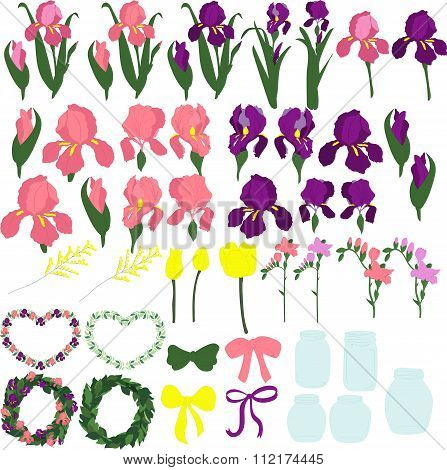 Set of purple and pink irises, the individual parts of the flowers, the buds of irises, leaves of ir