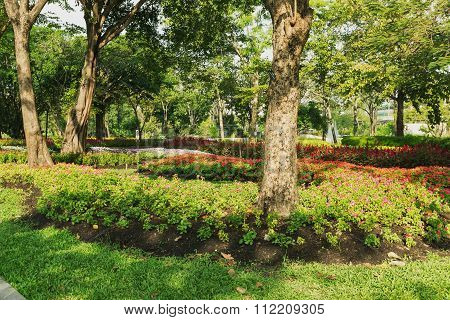 Trees And Flowers In Garden