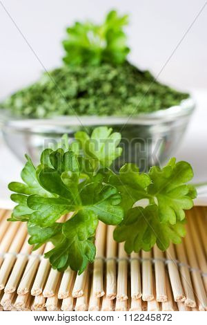 Fresh Parsley / Petroselinum Crispum