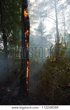 Sandhills Controlled Burn