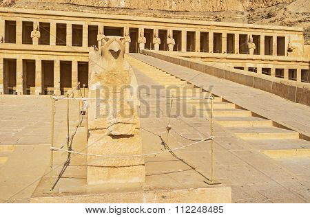The Falcon In Hatshepsut Temple