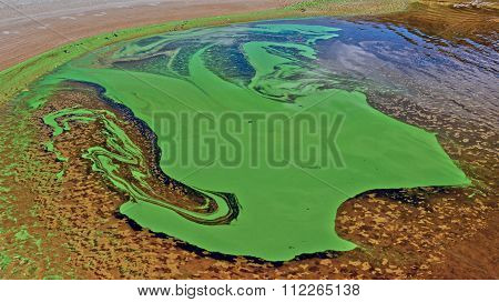 Tina and green algae on the surface of the river. poster