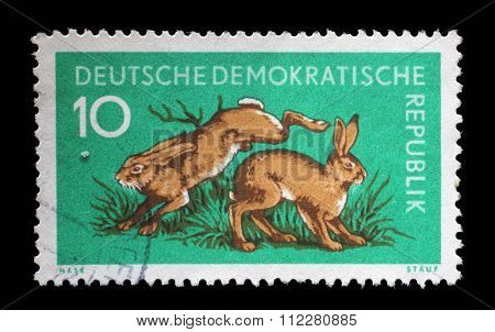GDR - CIRCA 1959: a stamp printed in GDR shows Hares, Lepus Timidus, Animal, circa 1959