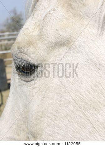 White Horse Face And Eye