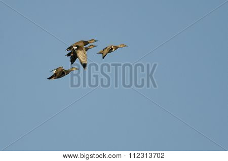 Small Flock Of Four Gadwall Flying In A Blue Sky