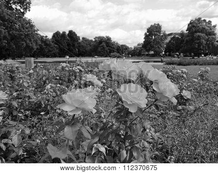 Gardens In Stuttgart Germany