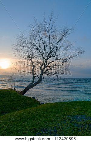 Siluett Of A Tree