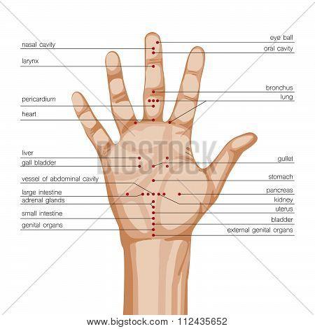 Acupuncture Hand Scheme
