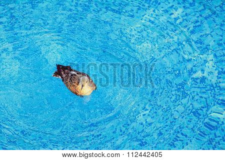 Seagull In The Pool