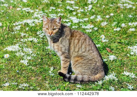 Cat On The Field