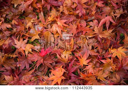 Colorful Fallen Leaves On Ground