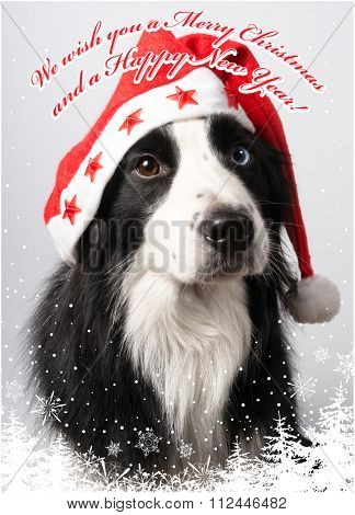 A dog in Santa's cap in We wish you a Merry Christmas and a Happy New Year! design