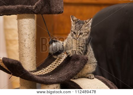 little Cat