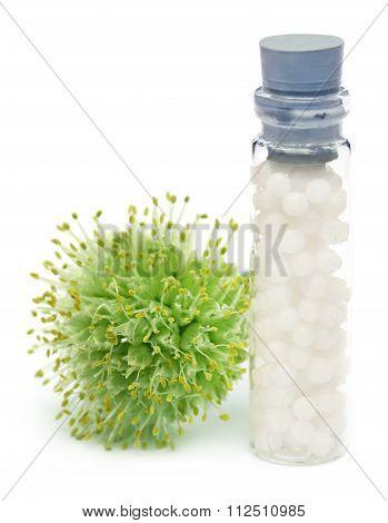 Homeopathy Globules