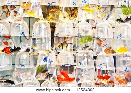 Colorful Tropical Fishes In Plastic Bagy For Sale