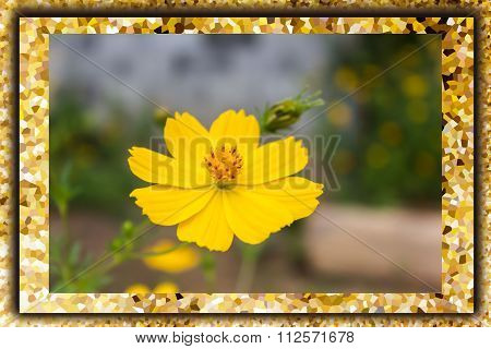 Lovely Single Yellow Flower Cosmos In Crystallize Pattern Frame