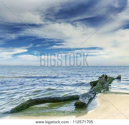 A Log In The Water