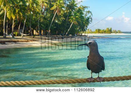 Bird in a beach in Tikehau