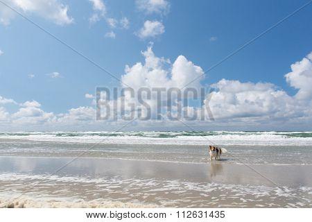 Dog swimming in the North sea