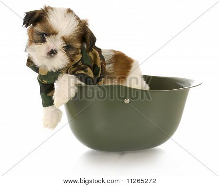 Cute Puppy In Camo