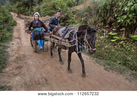 Chinese Farmers Returning From Field Work In The Horse Cart.
