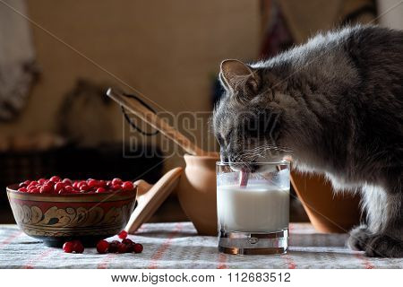 Cat drinking milk from a cup