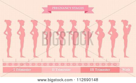 Vector illustration of pregnant female silhouettes. Changes in a woman's body in pregnancy. Pregnancy stages trimesters and birth pregnant woman and baby. Infographic elements poster