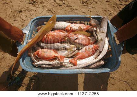 South America Venezuela Isla Margatita Juangriego Fish Market