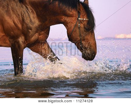 splashing bay horse outdoor summer evening gulf poster