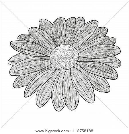 Vector black and white illustration of a flower.
