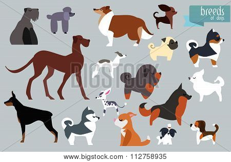 Different Breeds Of Dog. Vector Collection