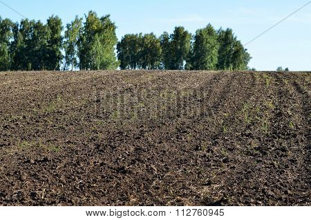 Plowed Field For Planting