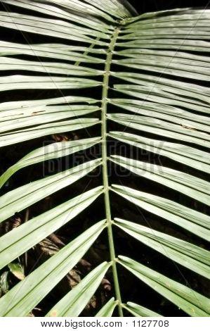 Rattan Leaf