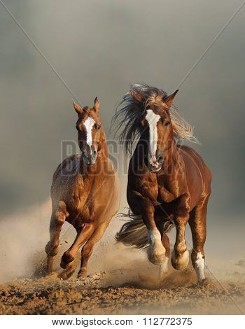 Two Wild Chestnut Horses Running, Front View