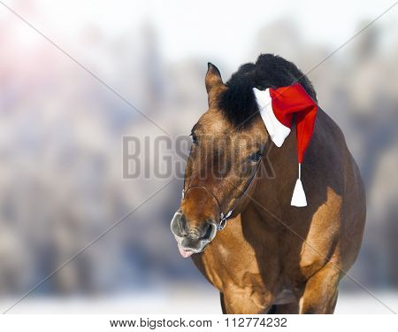 Cute Horse In Santa Hat Showing Tongue