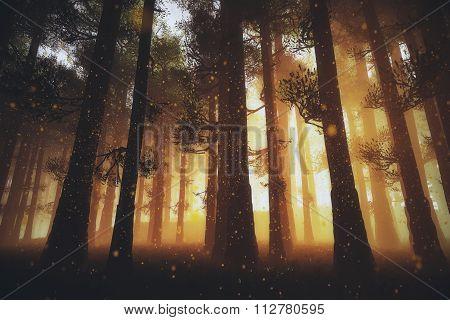 Mysterious Fairy Tale Deep Magic Forest