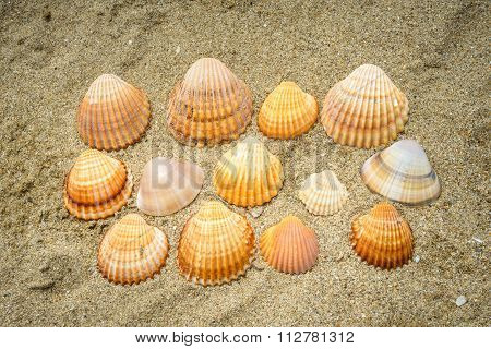 Lots Of Shells On Sand
