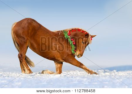 Red horse in snow