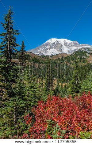 Mount Rainier with red foliage in the foreground and a blue sky